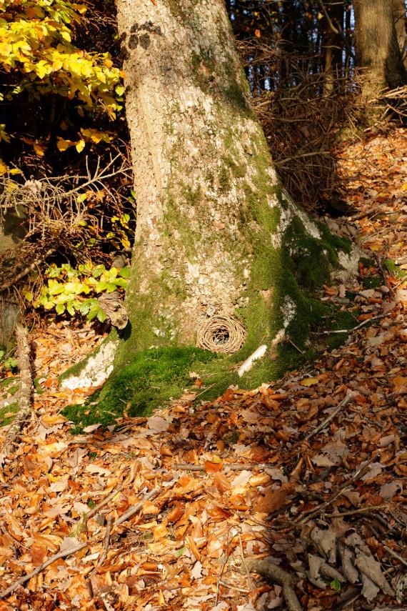 Landart Kunst in der Natur ahornblatt Brigitta Backhaus ahornblatt Gummersbach Kranz Baum