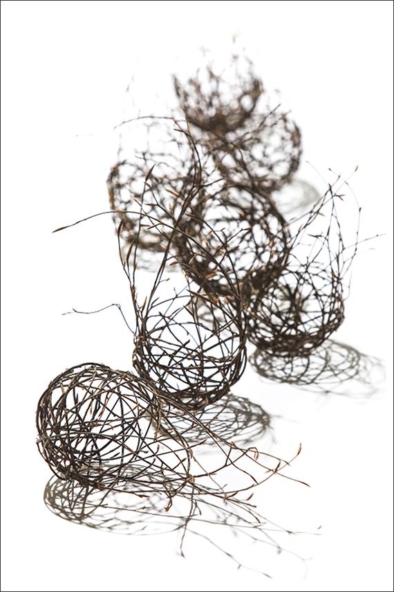 Florale Kunst; abstrakt; Buche