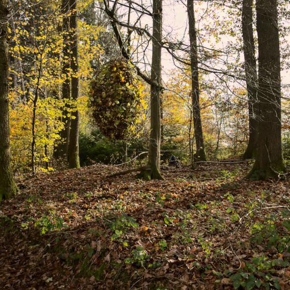 Landart Kunst in der Natur ahornblatt Brigitta Backhaus ahornblatt Gummersbach Objekt Buche Kokon