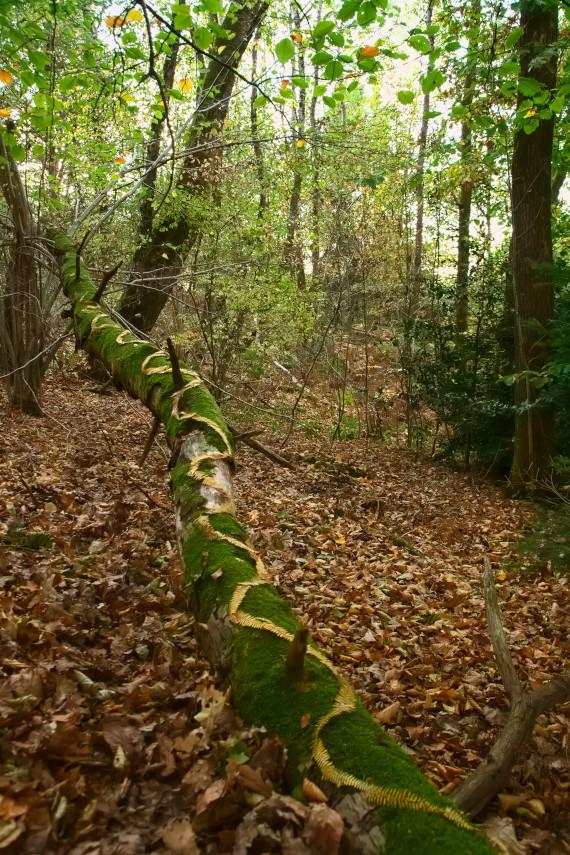 Landart Kunst in der Natur ahornblatt Brigitta Backhaus ahornblatt Gummersbach Farnkraut Linien