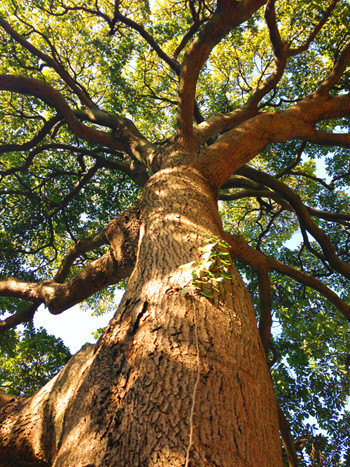 SOULKNOCK大樹イメージ画像