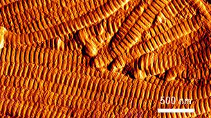 Dermis Foto mikroskopische Ansicht