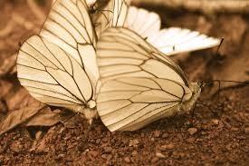 Des Papillons… dans le ventre :-)