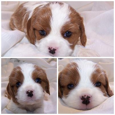 Peppy 4 Wochen