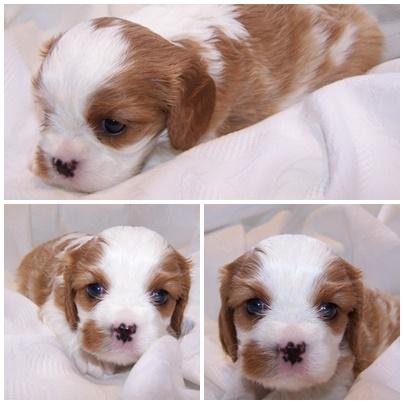 Penelope 4 Wochen