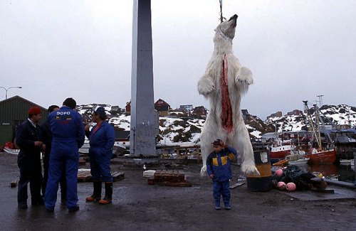 Reisefotograf-Juergen-Sedlmayr-Eisbär/Grönland