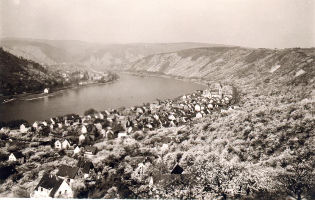 Kirschblüte 1955