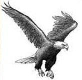 Shqiponja mbretërore