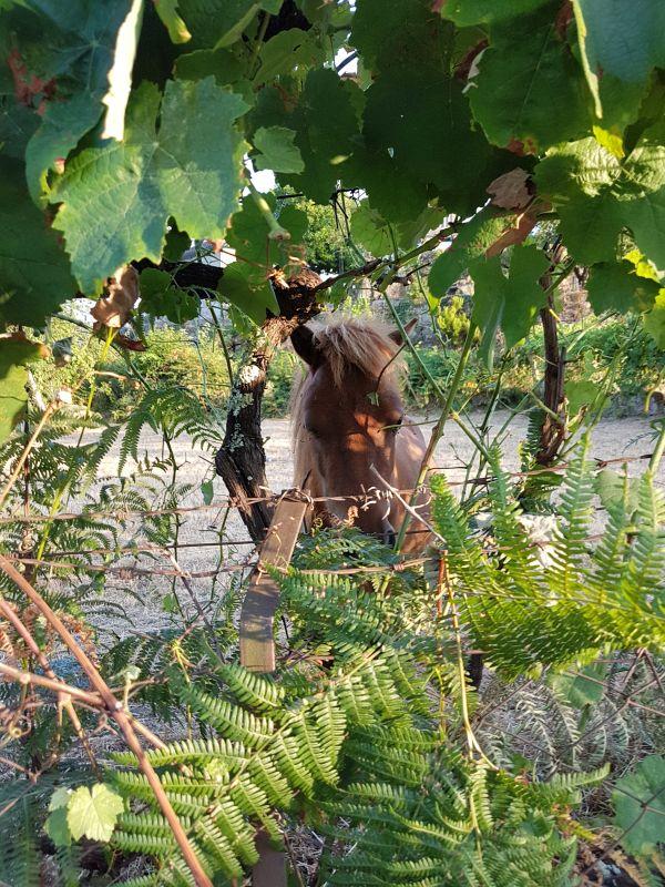 Horse activities Soajo Peneda Geres