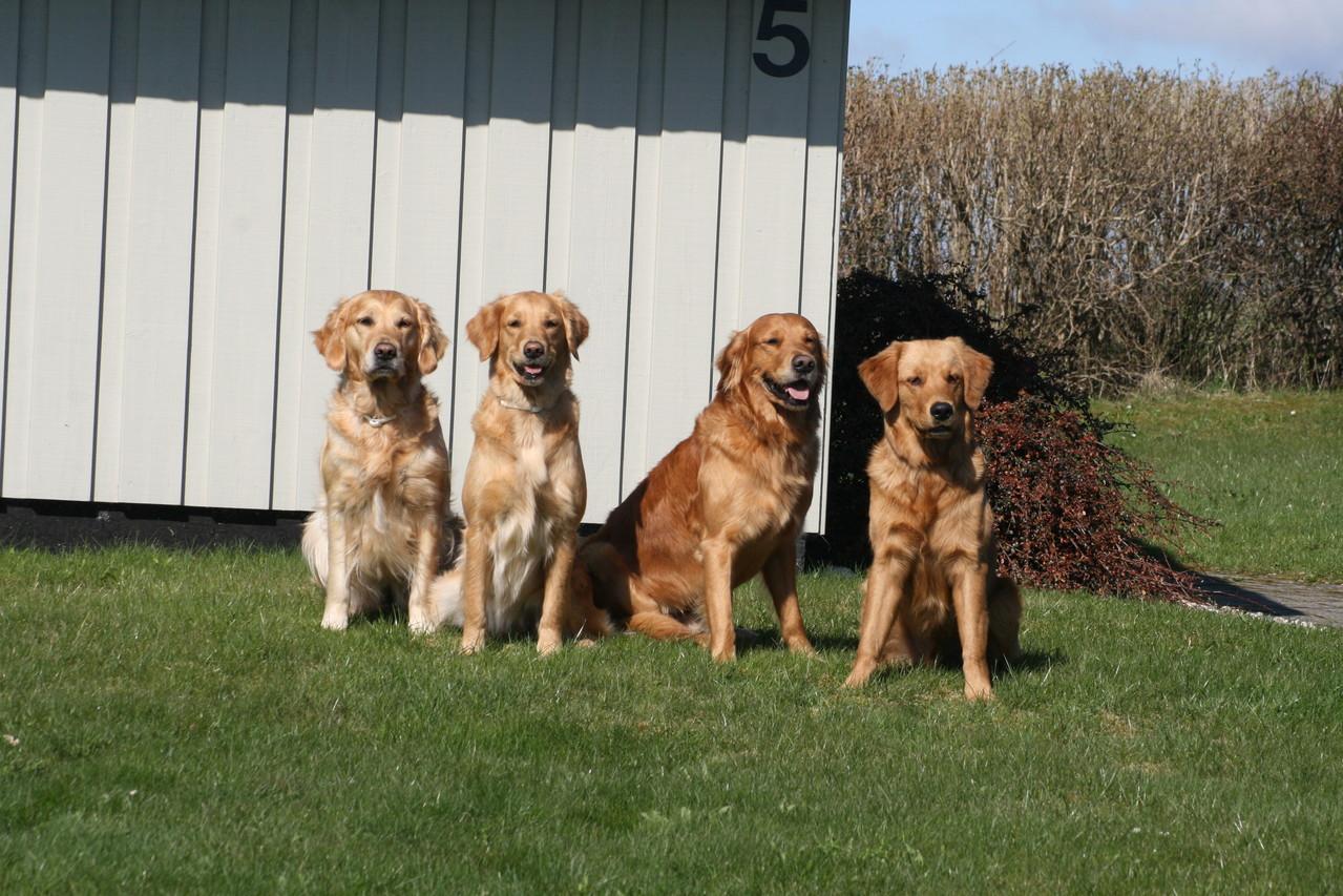 Peaches, Banshee, Colin und Finagan