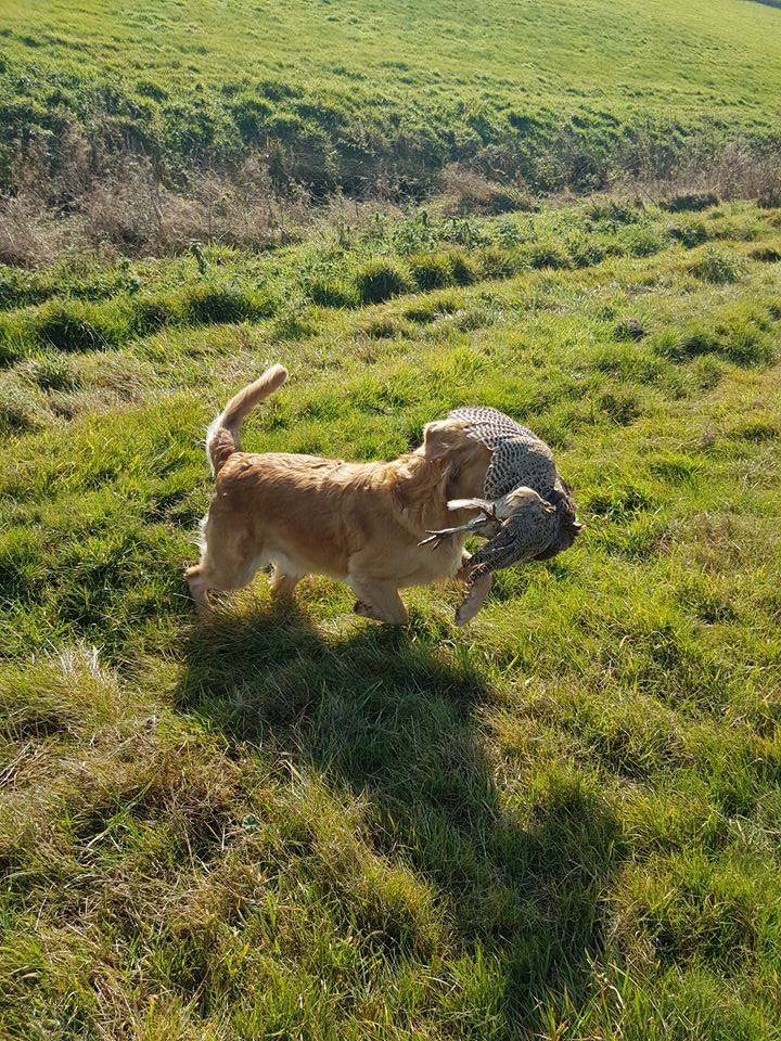 Blind Retrieve ;-)