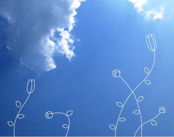 メイン画像/青空と花