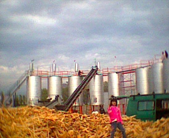 Fábrica de carvão vegetal no Chile: chips de madeira