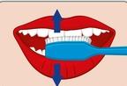 Richtig zähne putzen mit der elektrischen Zahnbürste, hoch und Runter