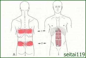 腹直筋のこわばりは、背中に痛みや張りがでます。