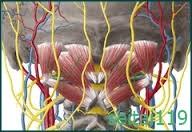 札幌市-ストレートネックと頭痛の関係