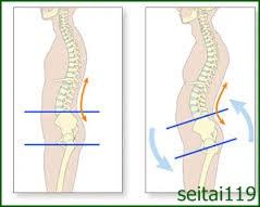 骨盤の前傾と腰椎の前湾