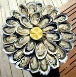 Assiette d'huîtres toutes fraîches