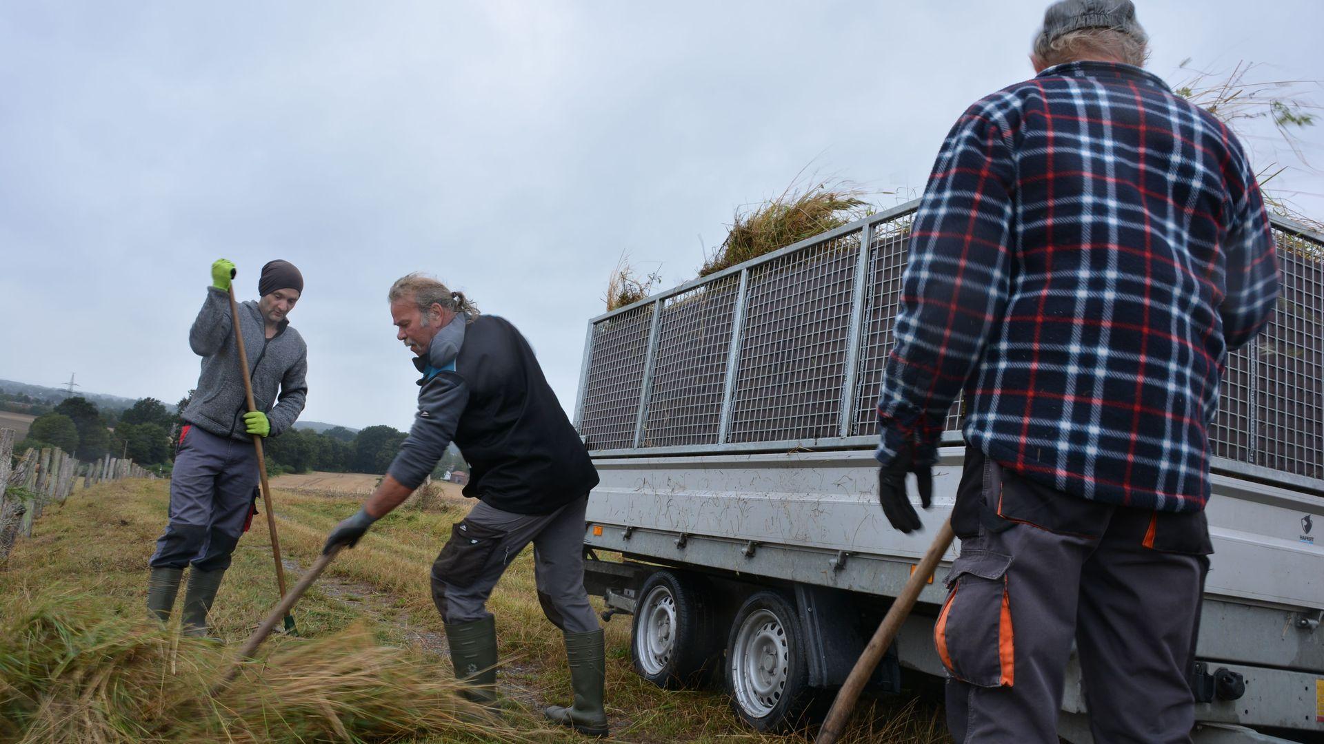 Die Mitarbeiter der Einsatzgruppe Naturschutz verladen das Mahdgut auf den Hänger. Foto wfc