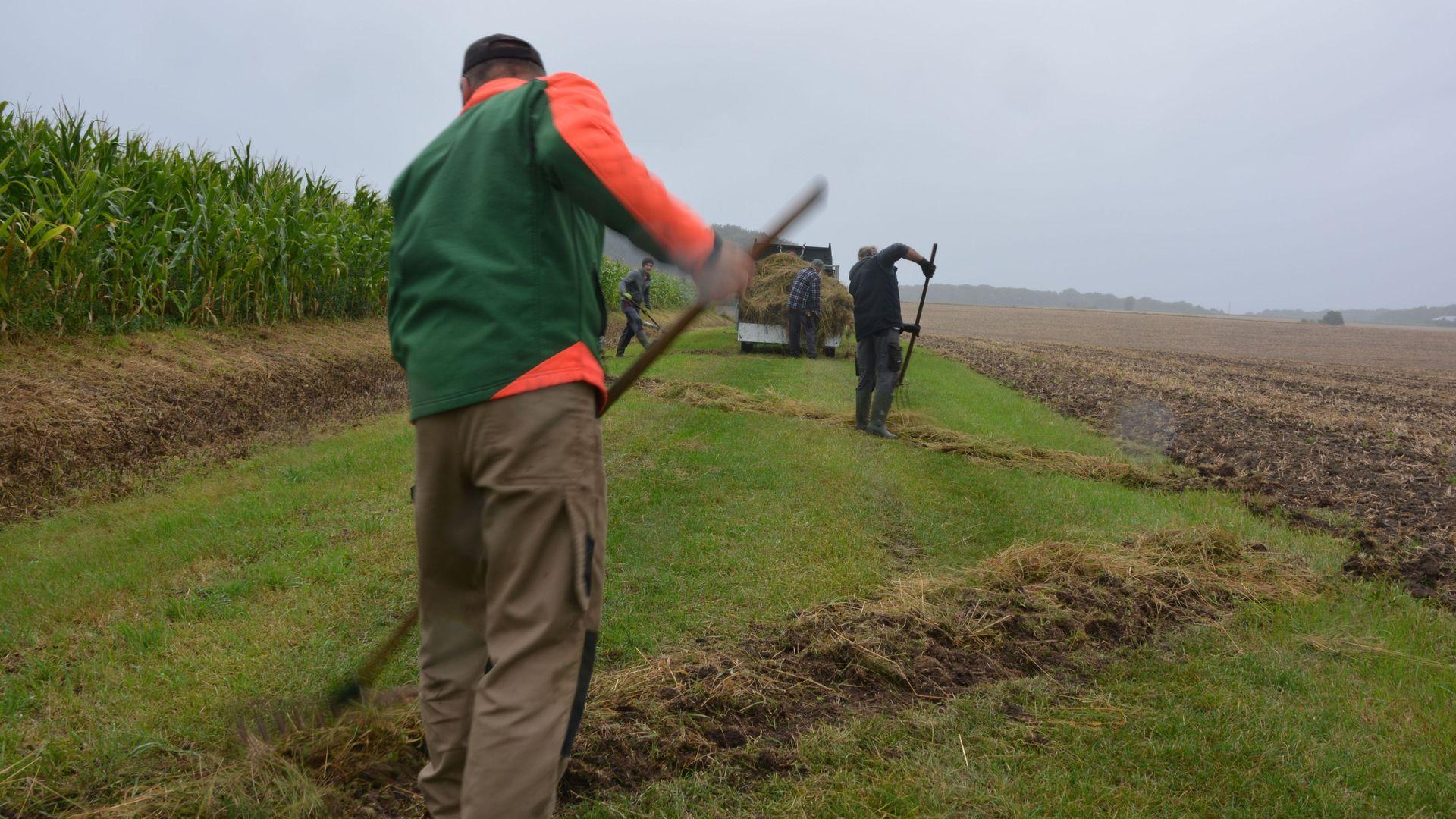 In schlangenförmigen Streifen trägt die Einsatzgruppe Naturschutz das Mahdgut an einem wenige Kilometer entfernten Weg wieder auf. Foto: wfc