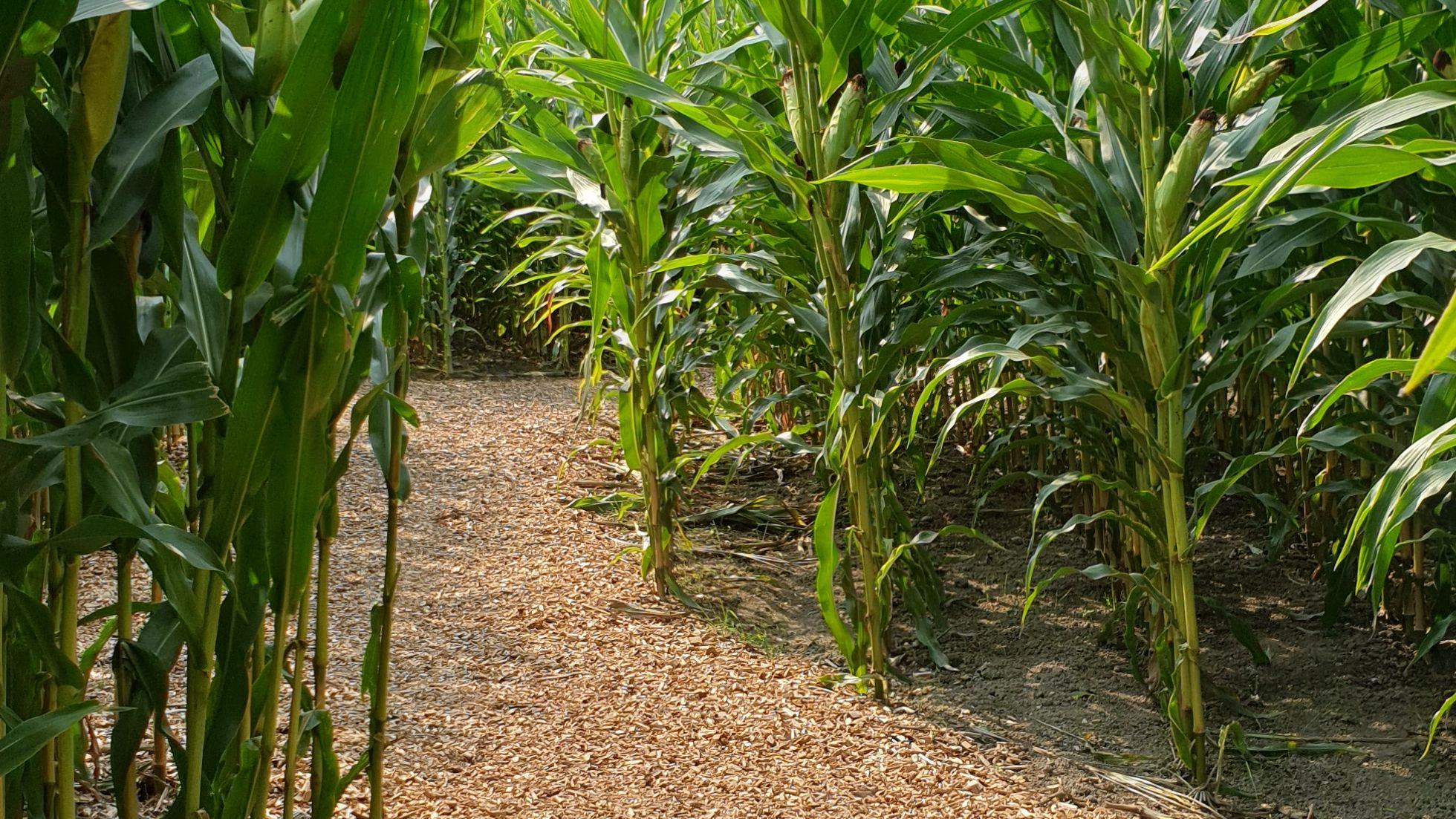 Cornys Maislabyrinth und Abenteuerpark mit Insektenreservoir | Foto A & A Parkdesign GbR