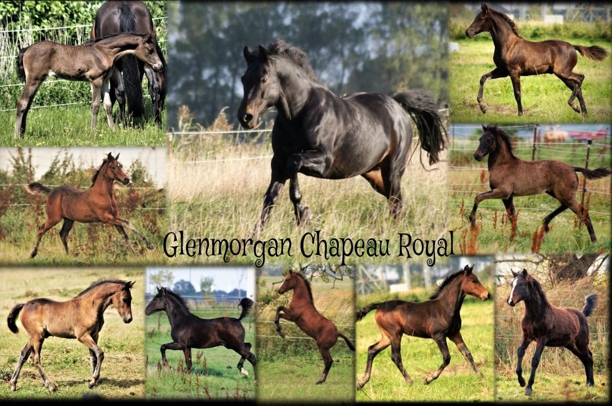 Glenmorgan Chapeau Royal