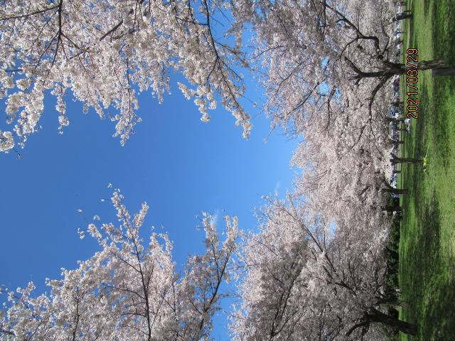 広瀬の春休み