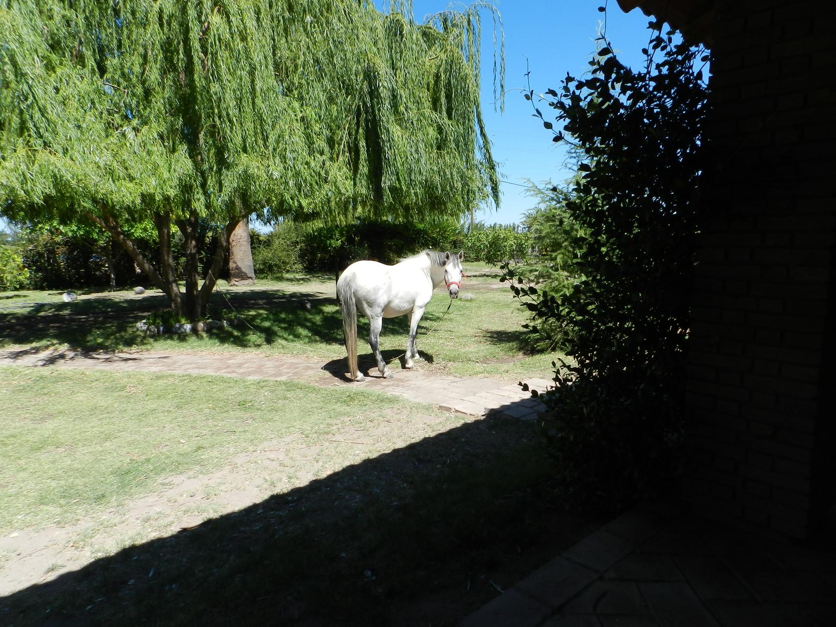 Pferd Nr.1, Bianca