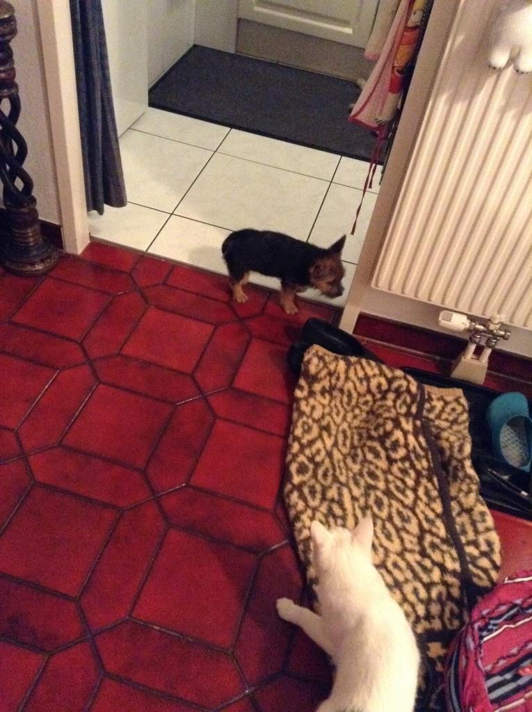 Der erste Kontakt mit Katze, ich fürchte mich!