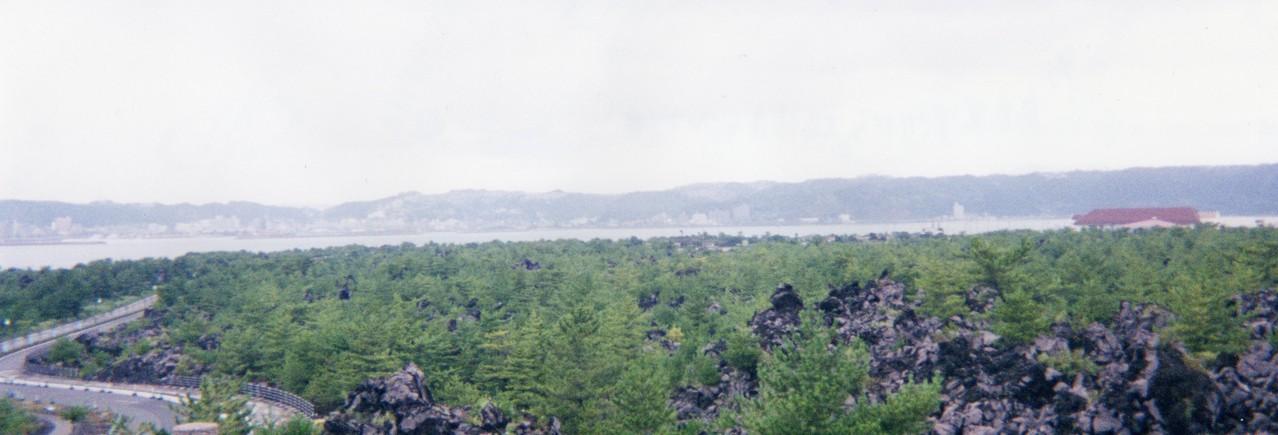 990807烏島展望所から大正溶岩とクロマツ林