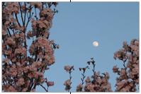 Mond im Blütenmeer