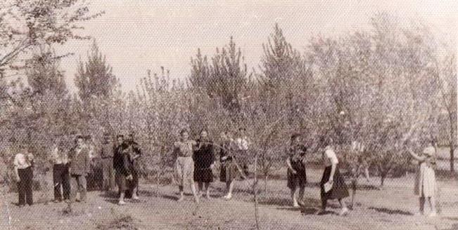 60-е годы. Школьный сад. Учащиеся школы ухаживают за фруктовыми деревьями