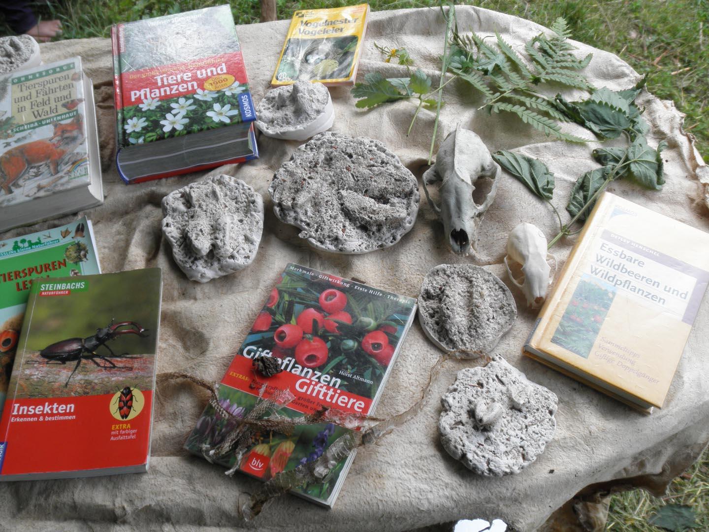 Naturstudium: Sich auskennen - in der Natur zu Hause