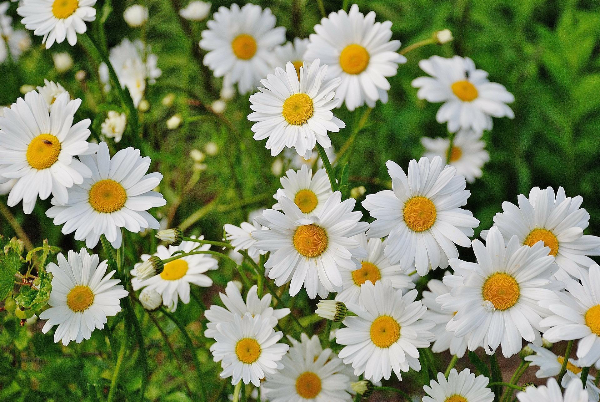 Blüten und Kräuter Kunde