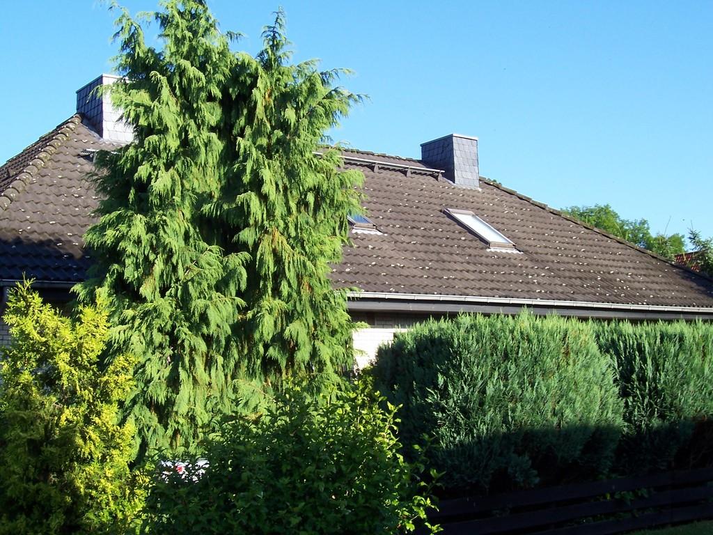Dachreinigung Meisel Dachbeschichtung Salzgitter Bad