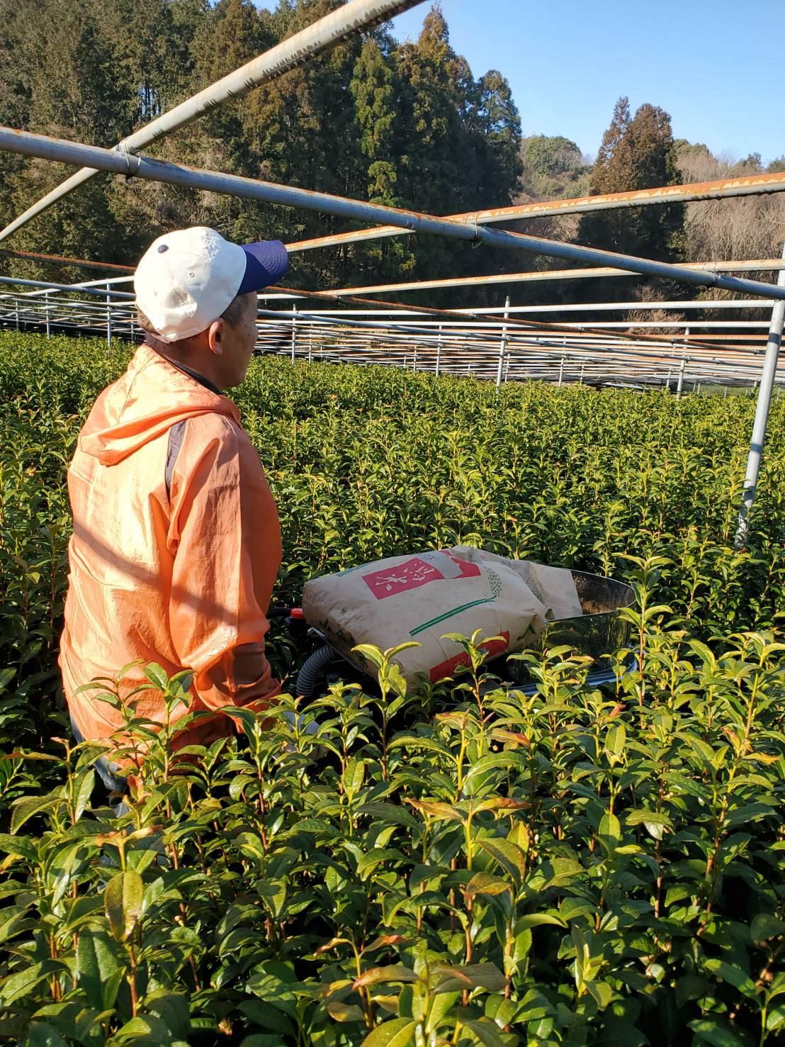 春の施肥作業