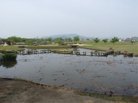 宗治蓮の池