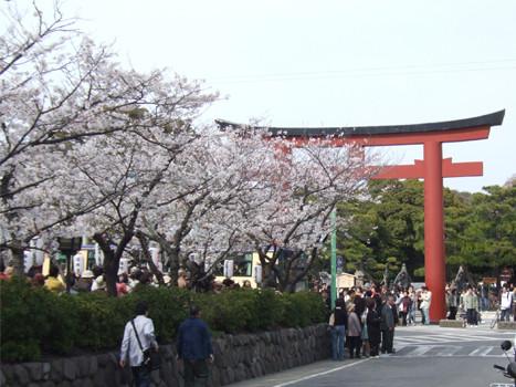 鶴岡八幡宮の鳥居と段葛