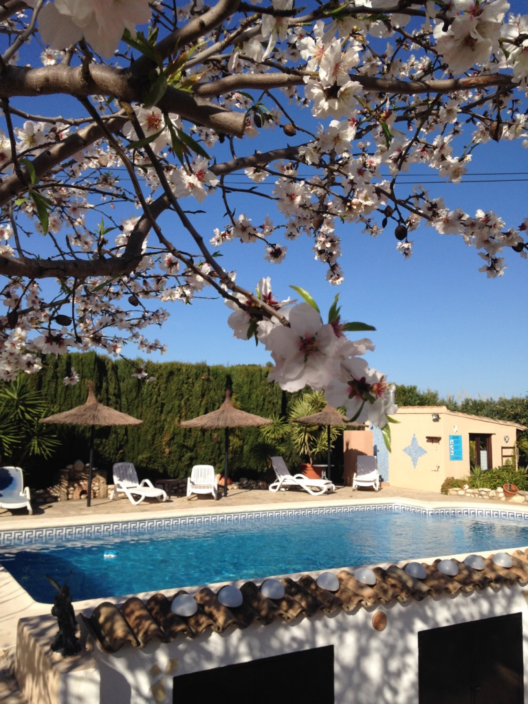 Enjoy some days during the almond blossom