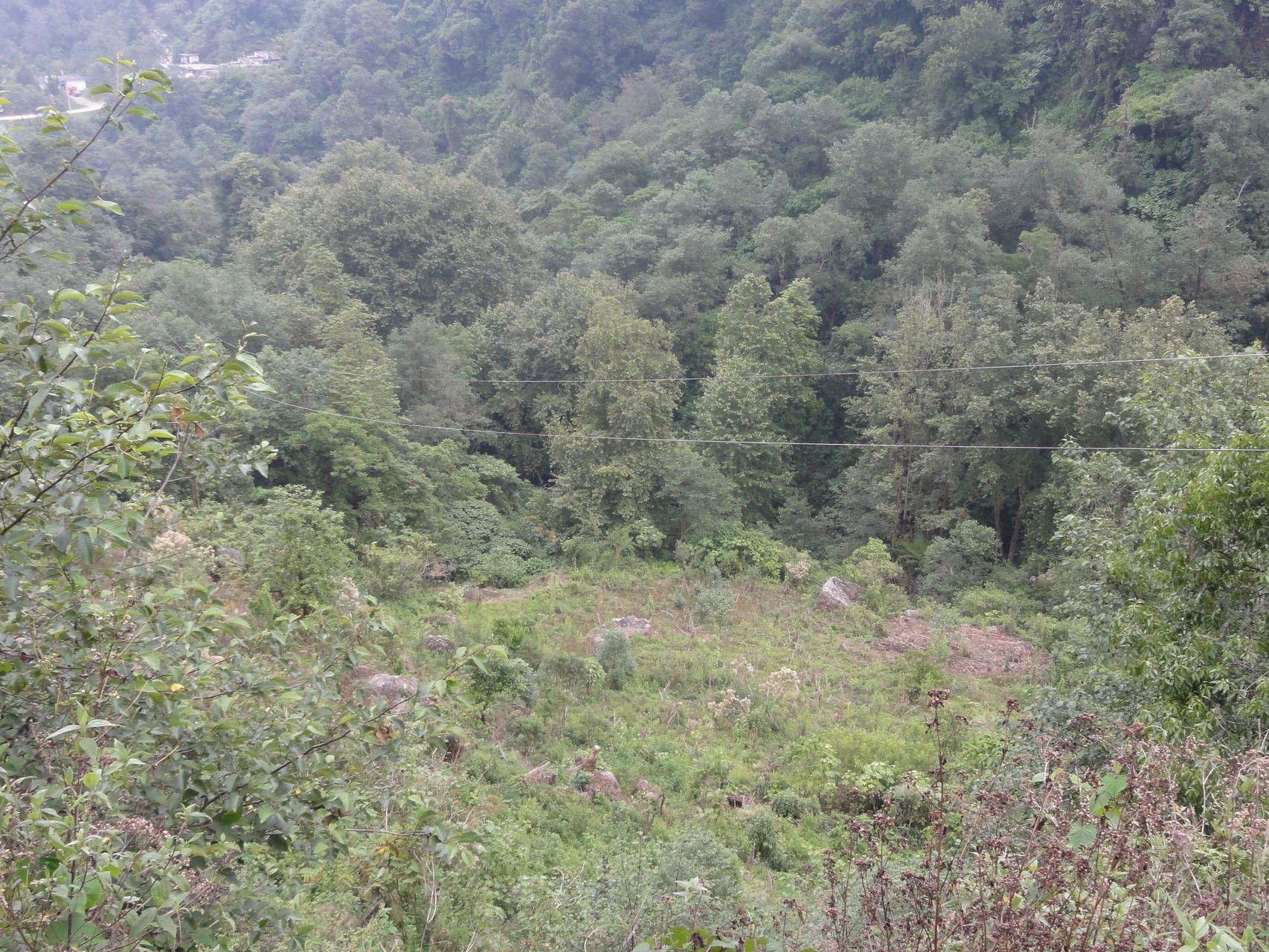 estamos en trámites de convertir la zona en reserva natural para proteger plantas y árboles, estudiarlos y aprender de ellos...