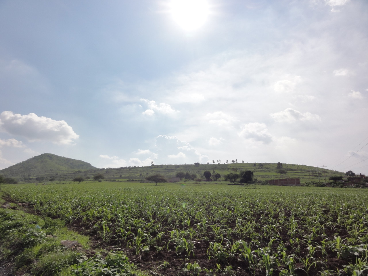 Hoya de Cintora