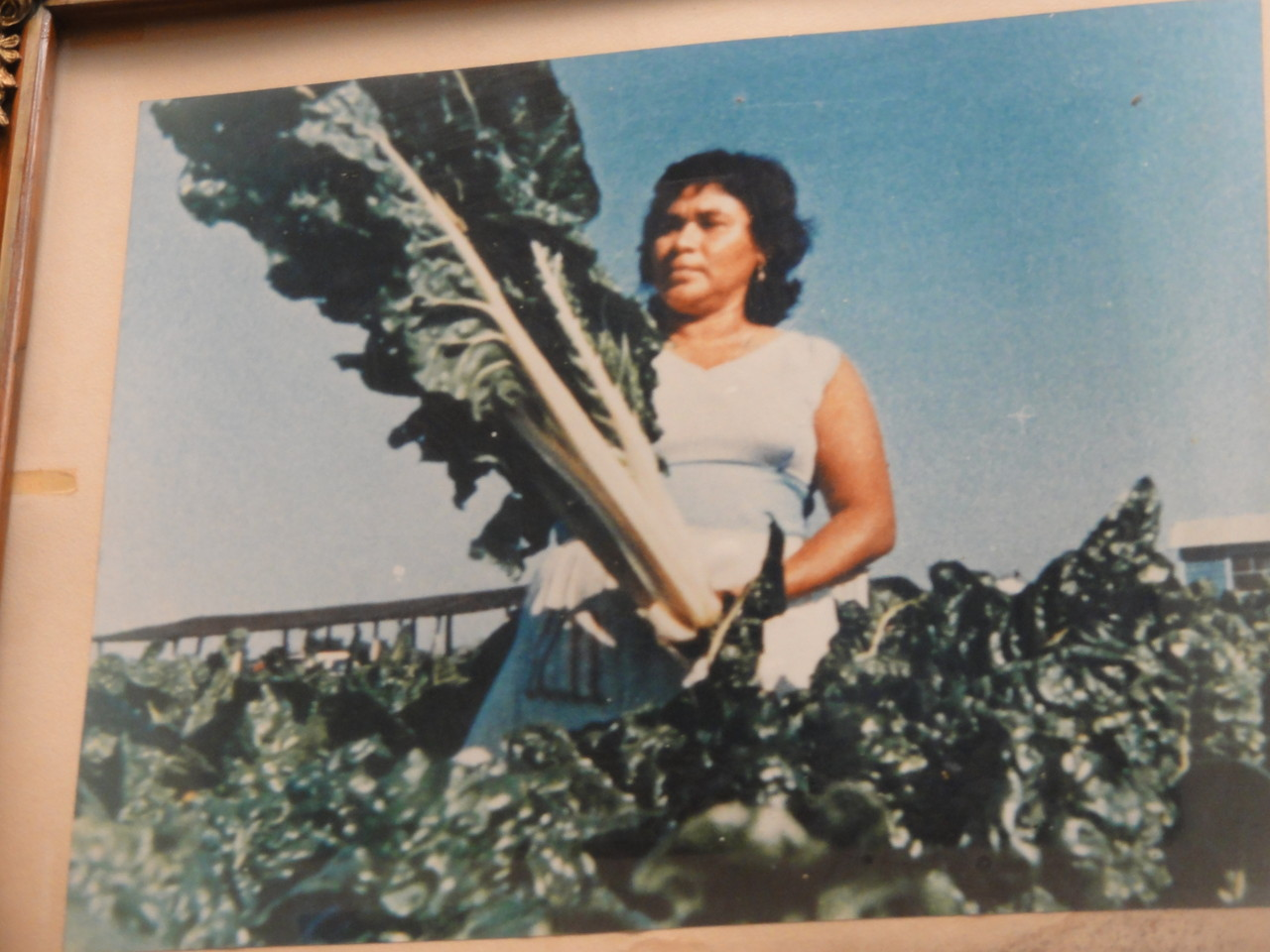 las hortalizas gigantes de ... la Hoya de Álvarez