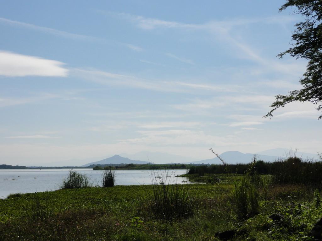 Laguna de Yuriria, same zone, where in the 50's they took that foto of a swimming dinosaur