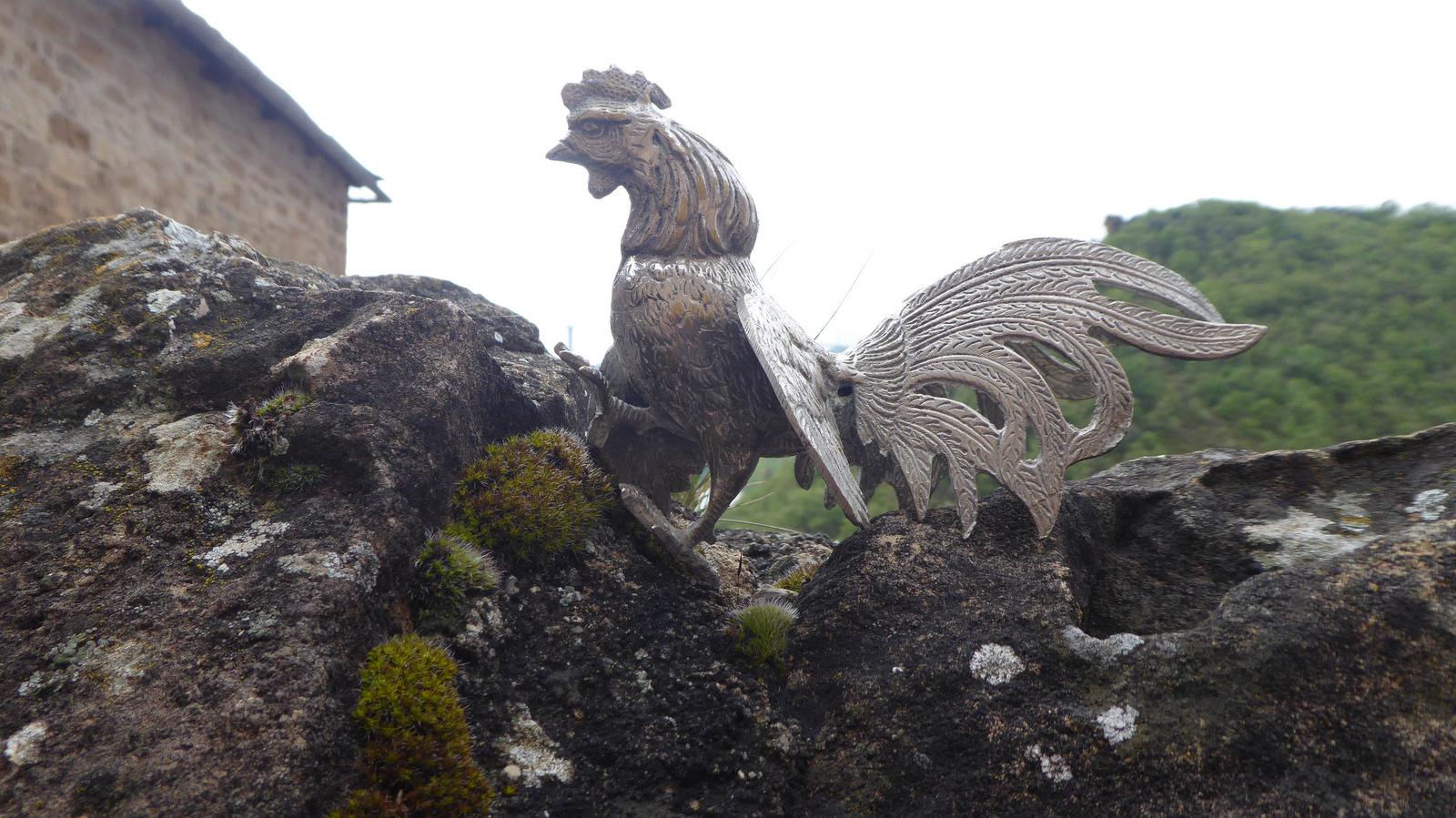 le coq (muet) du village !