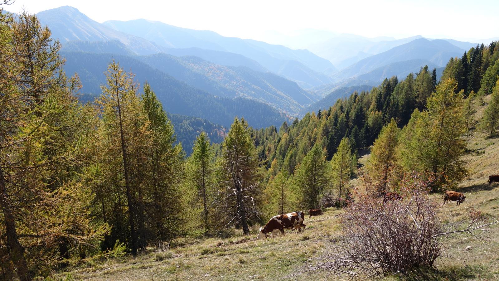 diverses comparaisons formulées : Vosges, Alsace, Jura ...