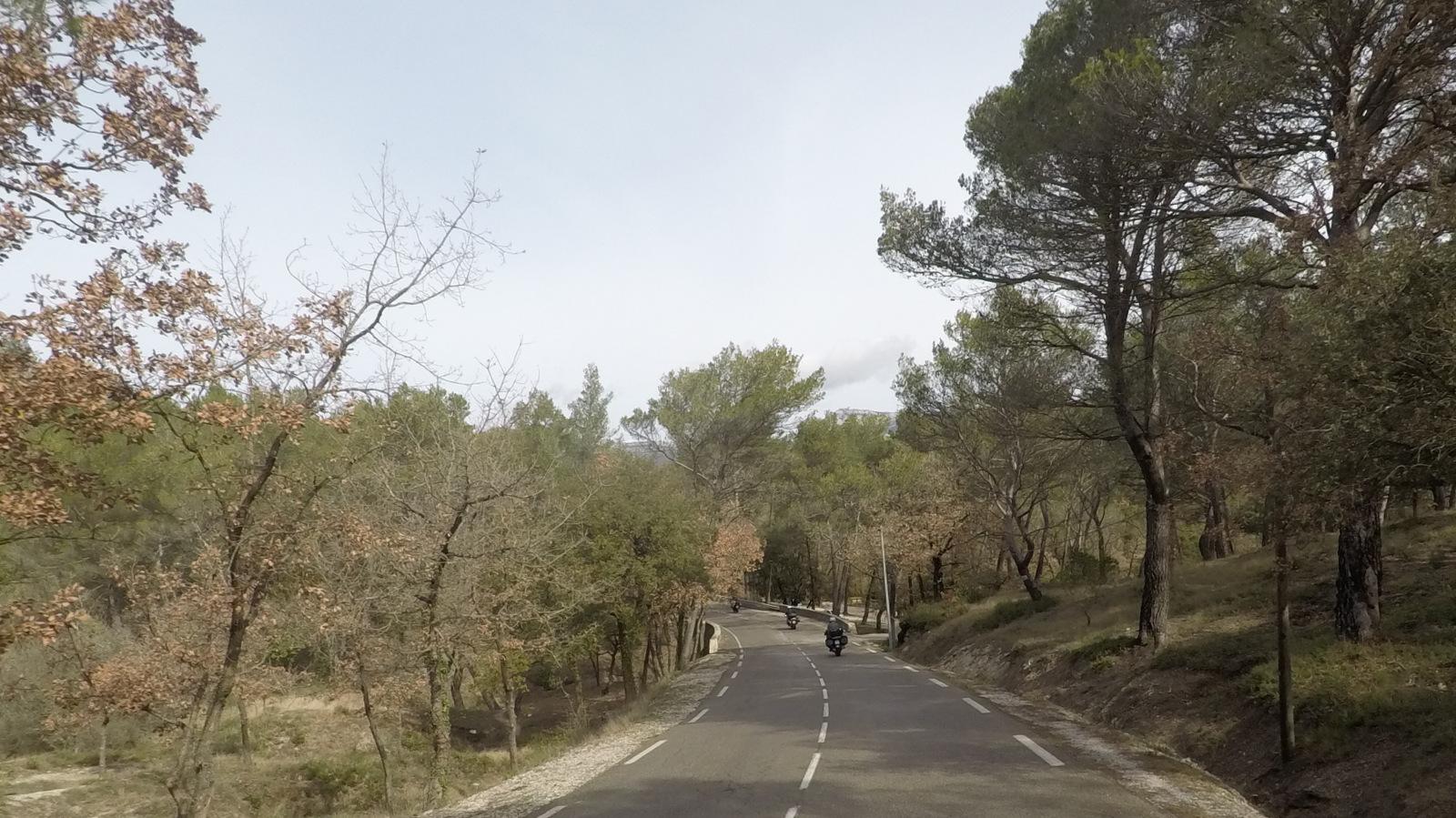 belle forêt de pins et de chênes