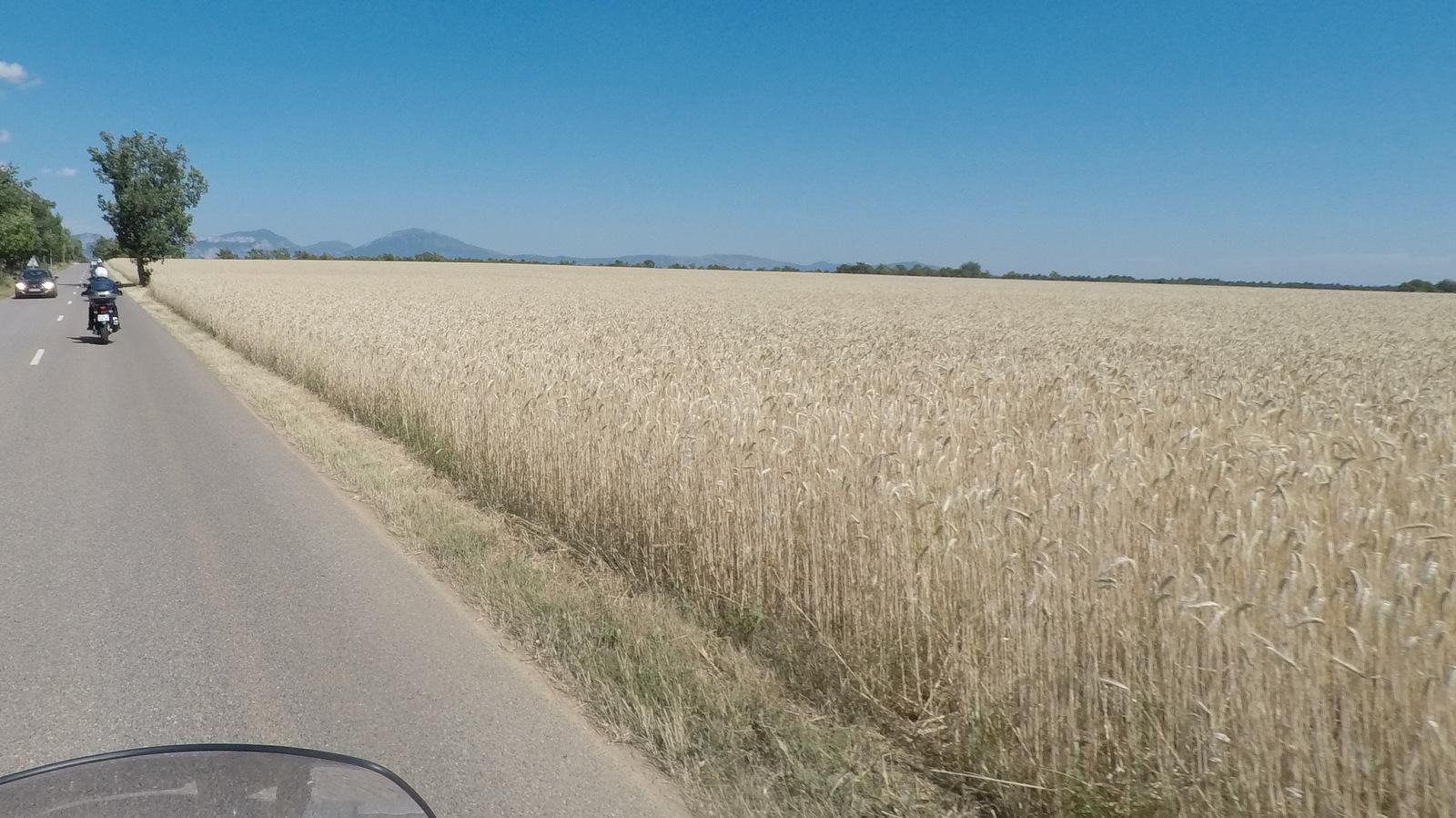 ... champs de blé ...