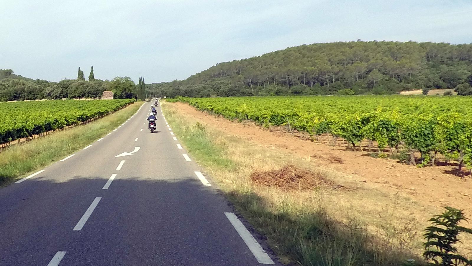 ... puis entre les vignes