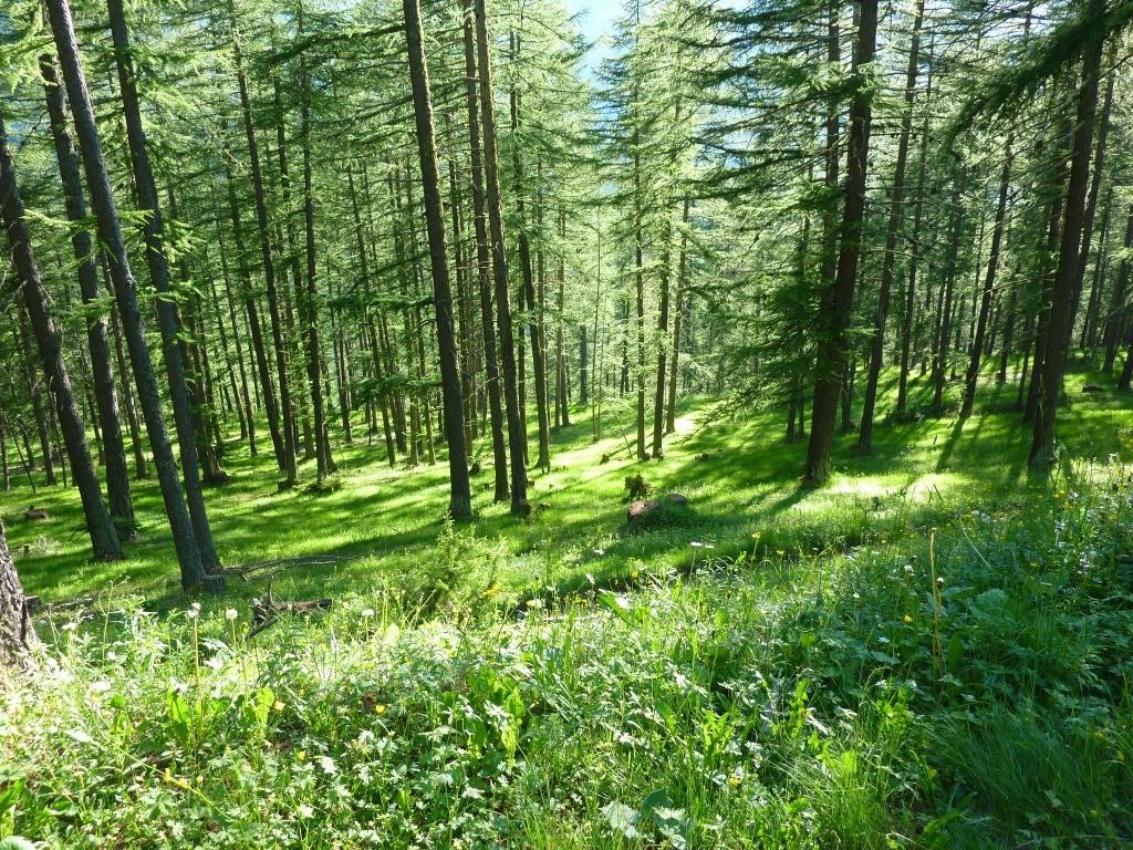 ... dans les bois