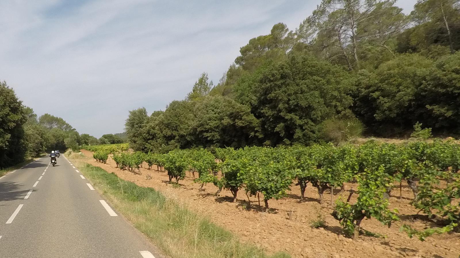 ... passage entre forêt et vignes ...